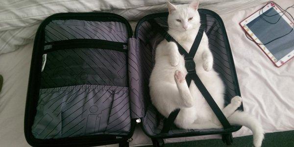 кота в отпуск брать не стоит