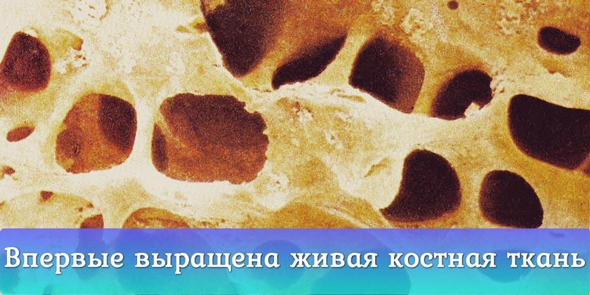Учёные вырастили живую костную ткань
