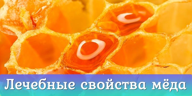лечебные свойства мёда