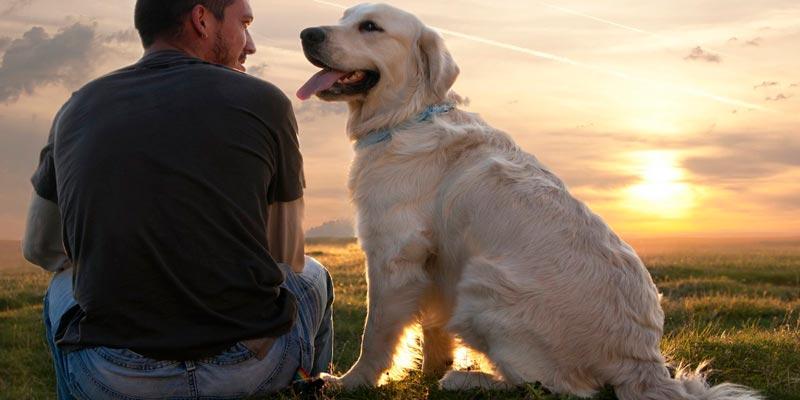 Собаки продлевают жизнь своим владельцем