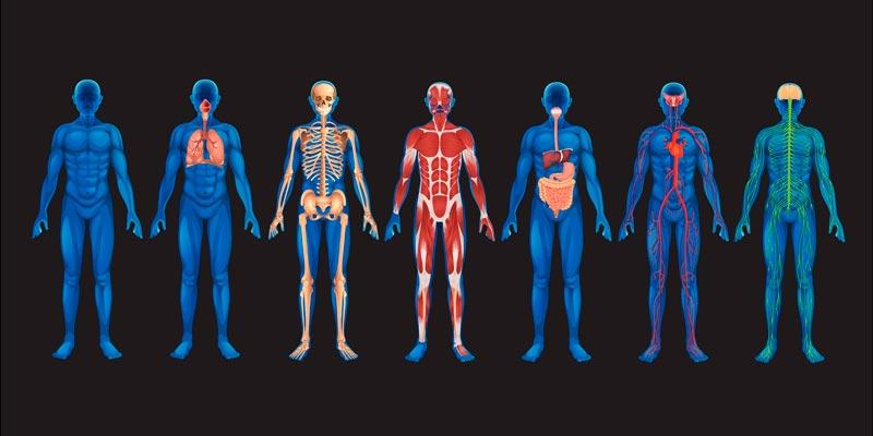 Любопытные факты о человеческом теле