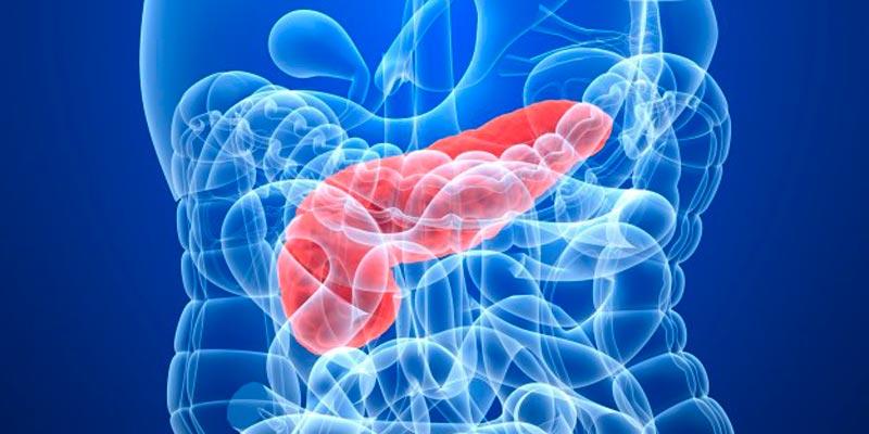 клетки поджелудочной железы для диабетиков