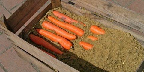 Складываем морковь в ящики для хранения в погребе