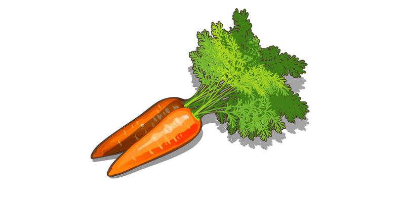 Как правильно хранить морковь в погребе и домашних условиях