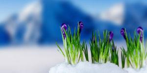 Поздравления с первым днём весны в прозе